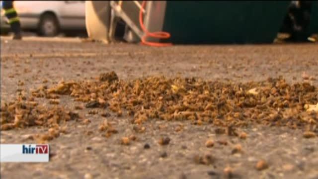 Húszezer méh szabadult el egy kamionbaleset után