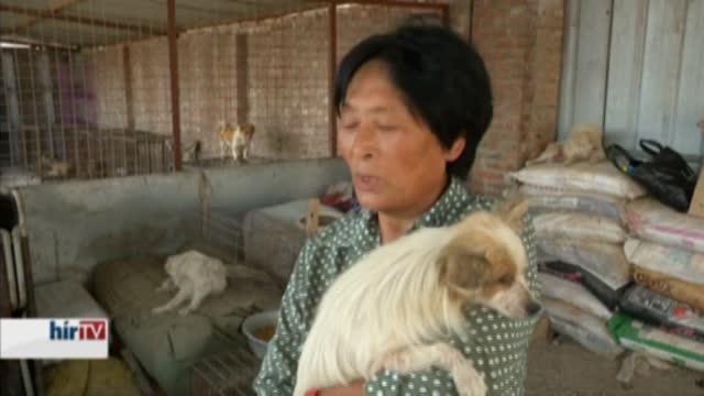 Ázsia – Kutyasors