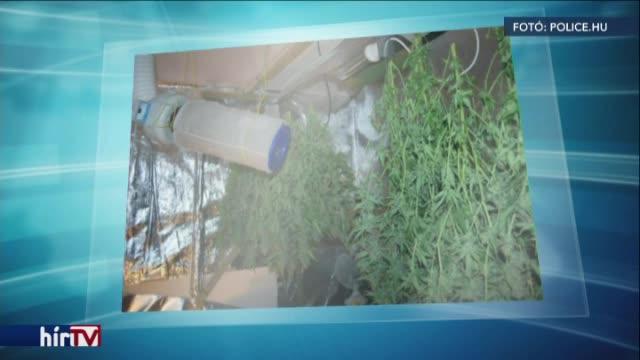 Vádemelést javasoltak - beismerte a kábítószer-termesztést