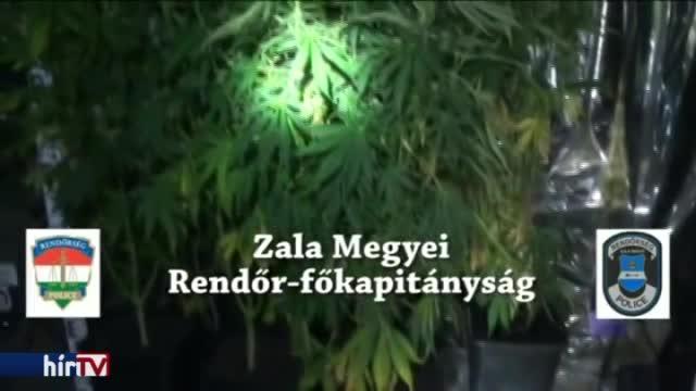 Beismerte, drogokat termesztett