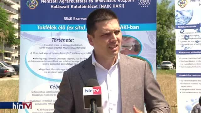 Kecsegéket telepítenek a Dunába és a Tiszába