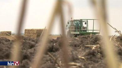 Nagyot ugrott a kukorica ára
