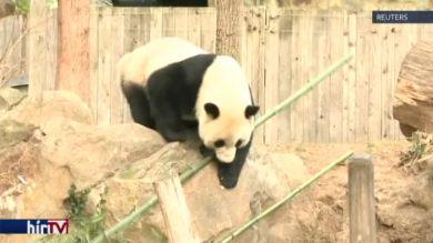 Hazamegy Bao Bao, a pandalány