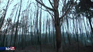 Halálos erdőtűz Portugáliában