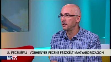 Reggeli járat – Új fecskefajt figyeltek meg Magyarországon