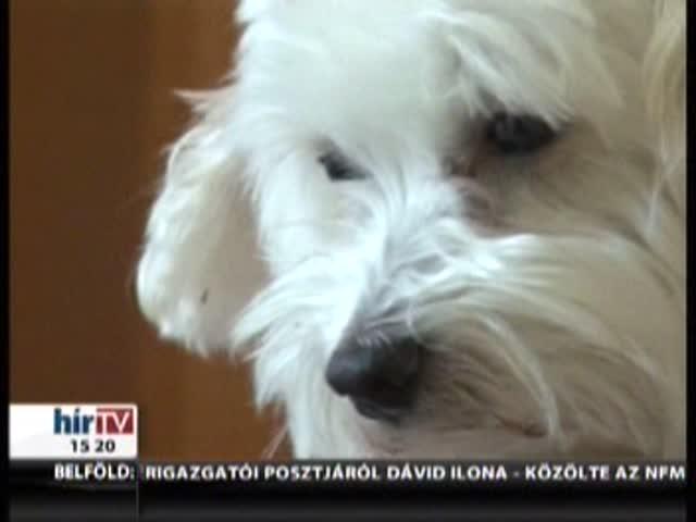 Bíróságra is kerülhet, ha a liftben szállítja a kutyát