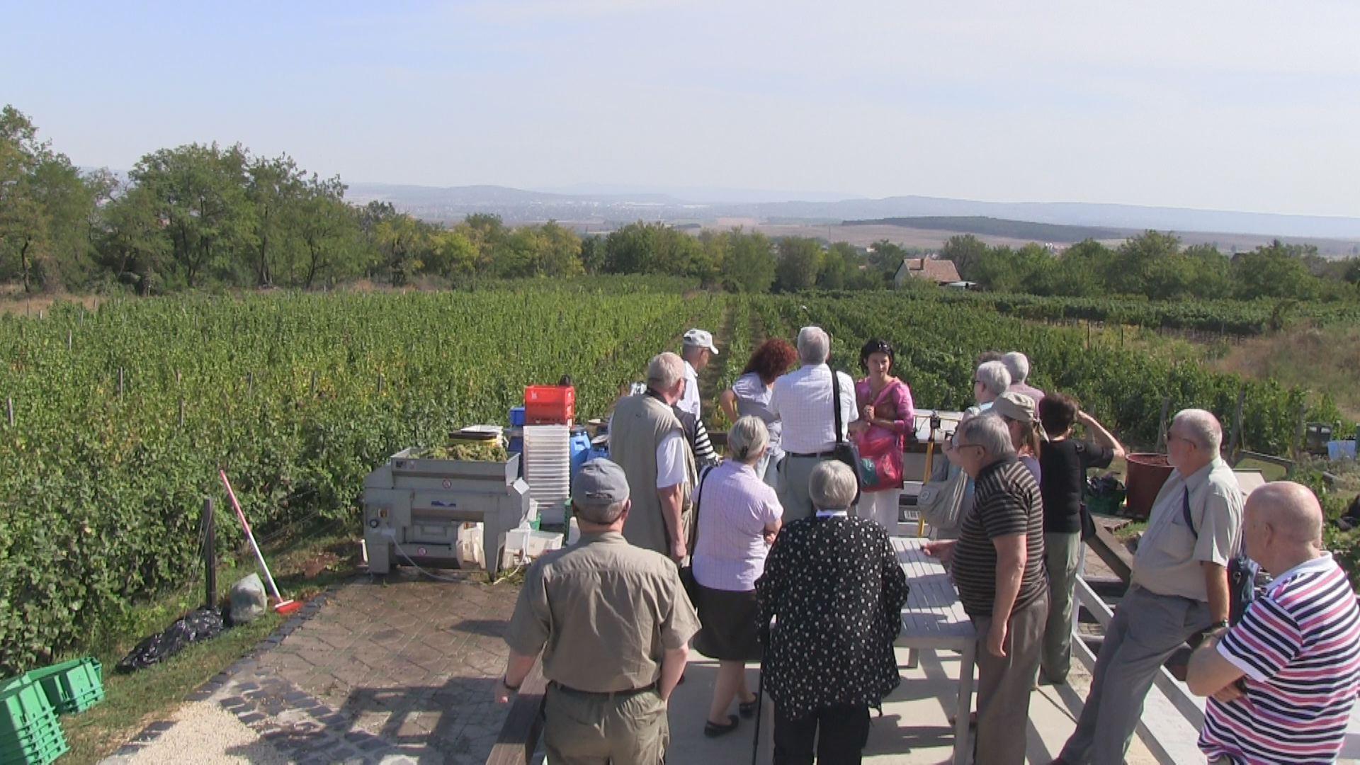Rejlik még felfedezetlen kincs a magyar borban