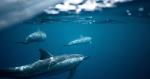 氣候變化令海洋含氧量下降,影響海洋生態