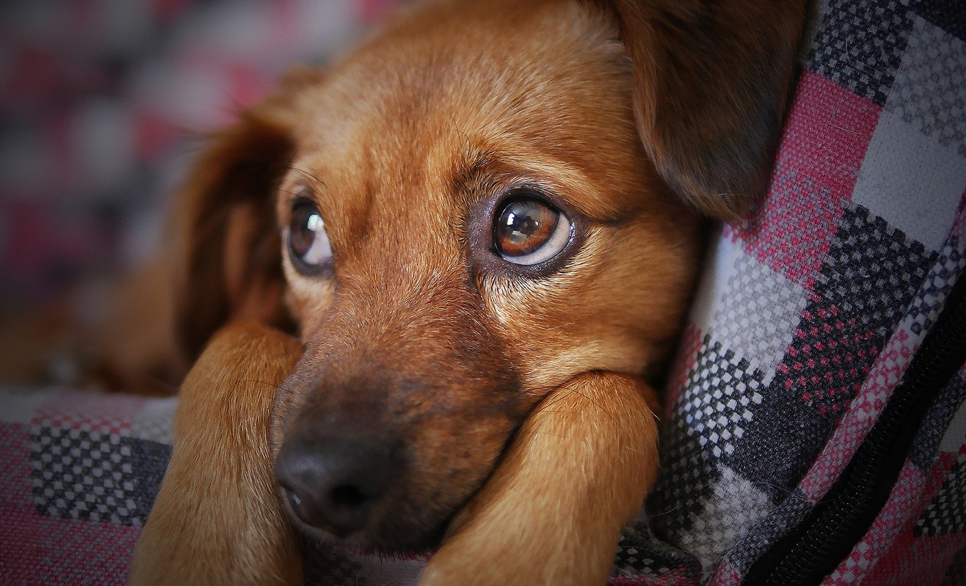 """Xylitol, which can poison dogs, is marketed as """"birch sugar."""""""