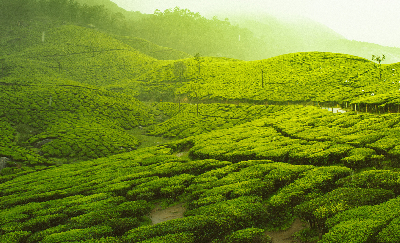 West Bengal ranks number one in tea productivity.