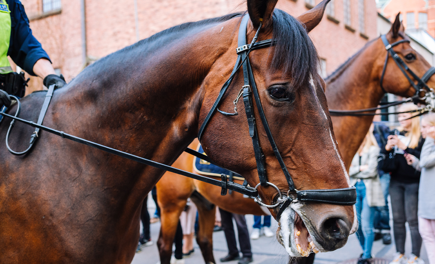 Anti-lockdown protestors in Australia attacked police horses.