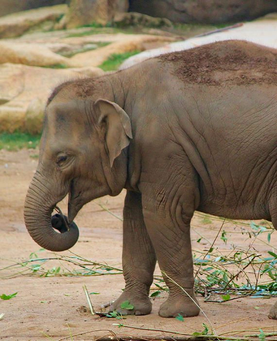 Two members of the Muslim community were arrested in relation to the elephant's death in Kerala.