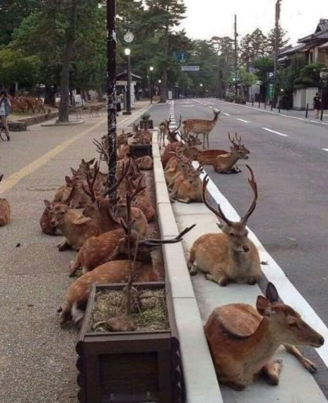 A herd of deer is lounging on an empty Ooty-Coimbatore road after COVID-19 lockdown.