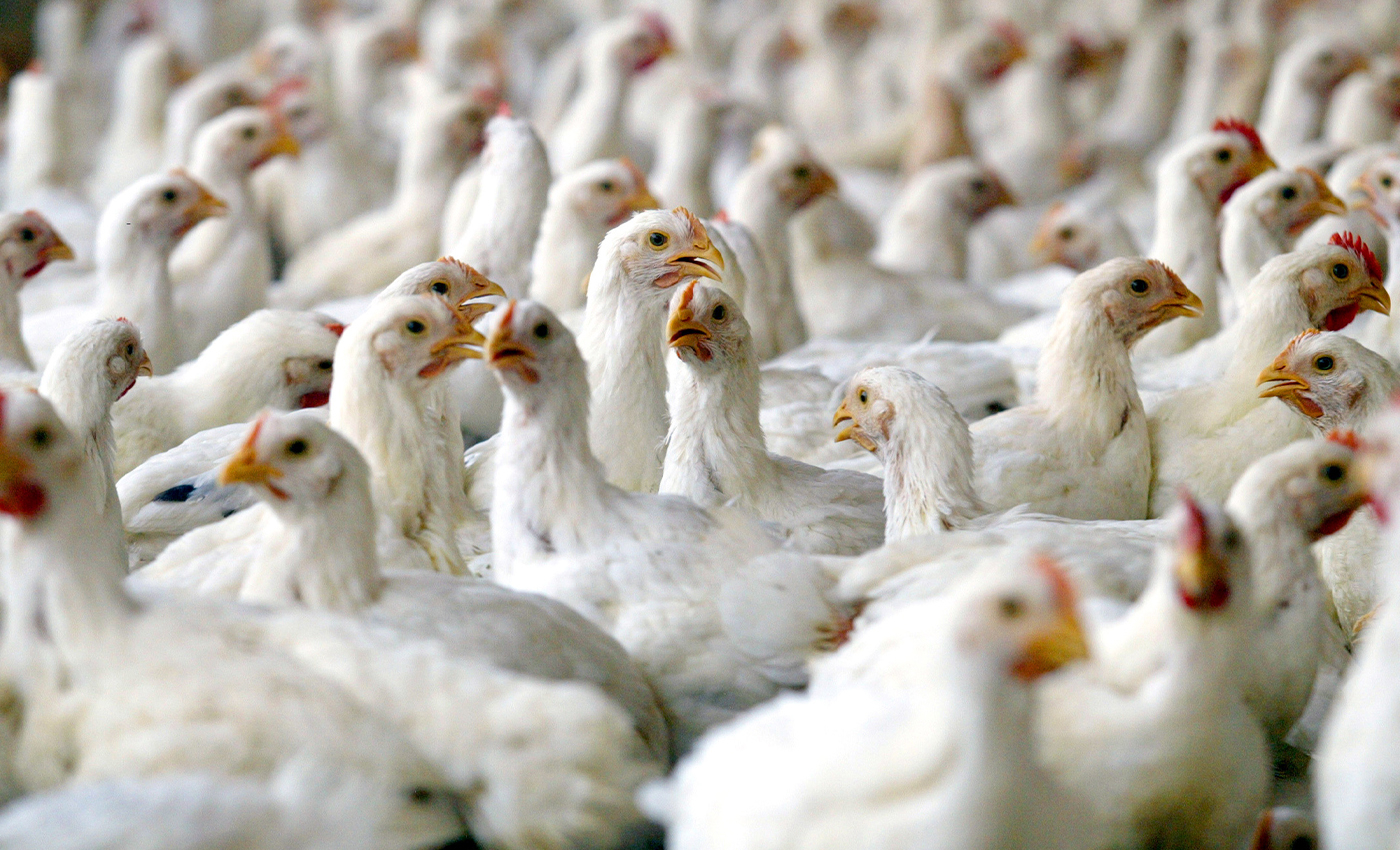 China reports the first case of H10N3 avian influenza in humans.