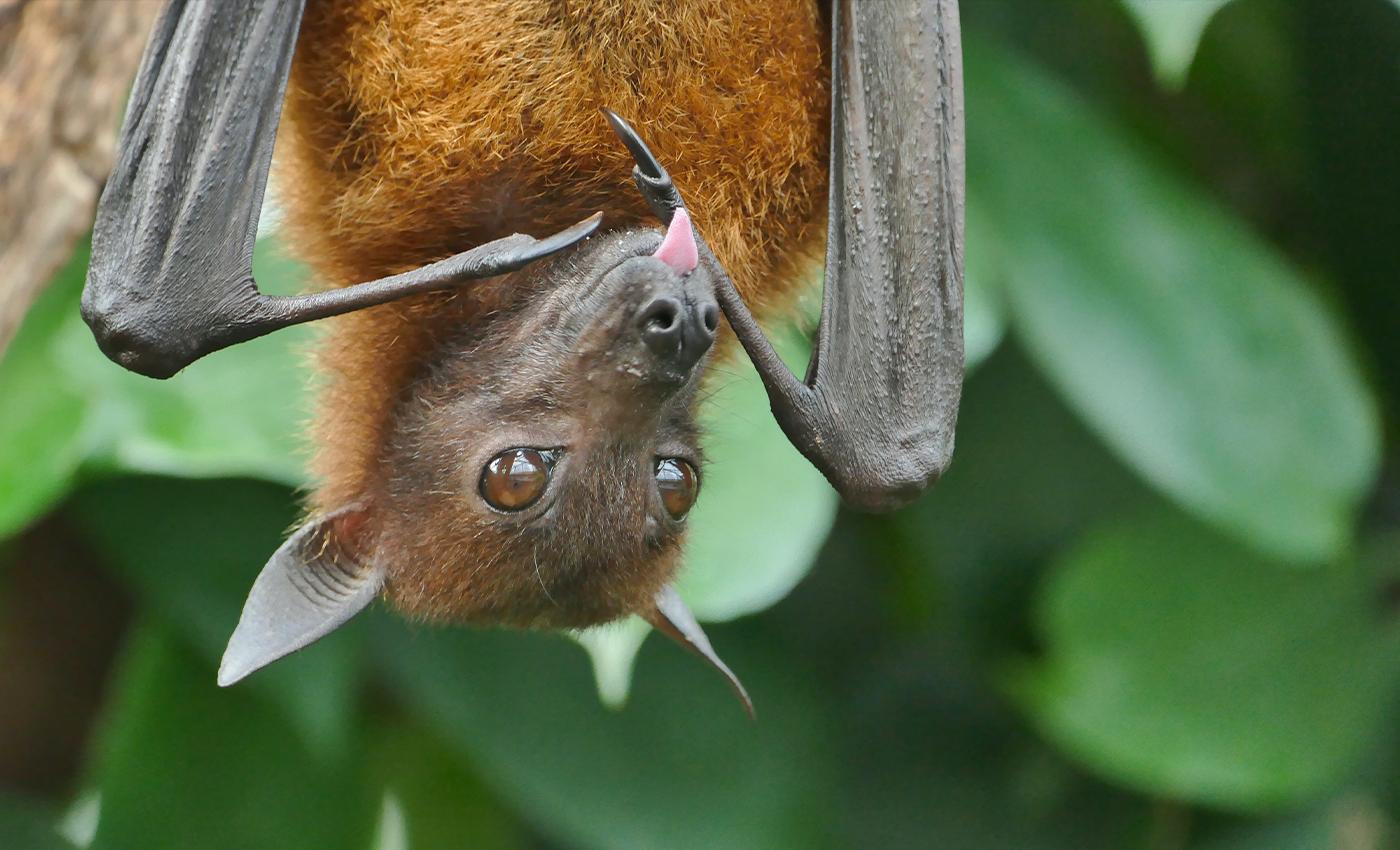 COVID-19 originated in bat caves in China.