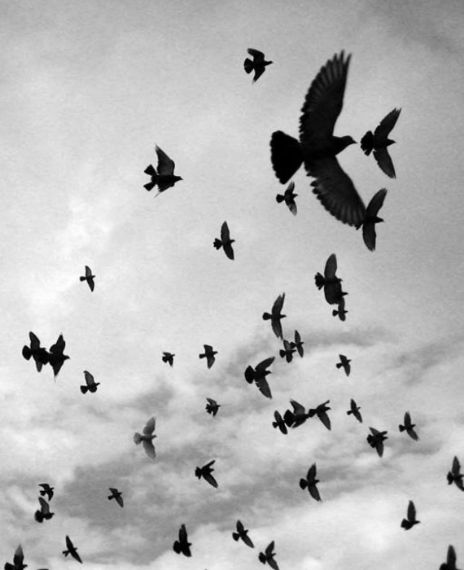 Thousands of crows recently launched an attack in Saudi Arabia.