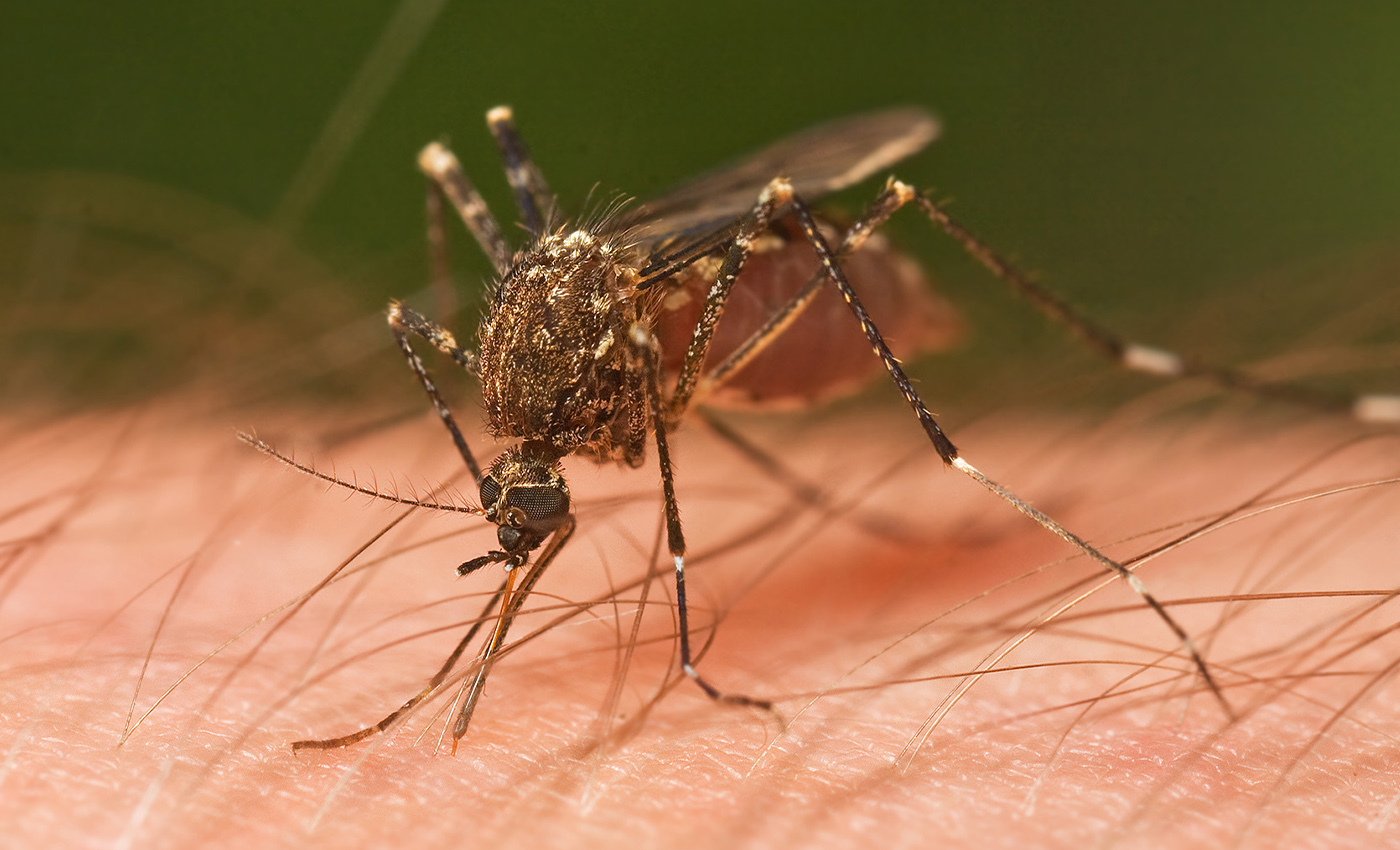 The Bill and Melinda Gates Foundation wants to make mosquitoes extinct.