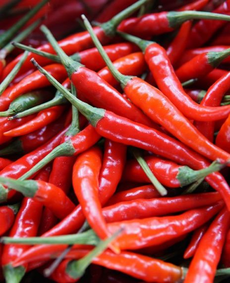 Humans are the only animals that enjoy spicy foods.