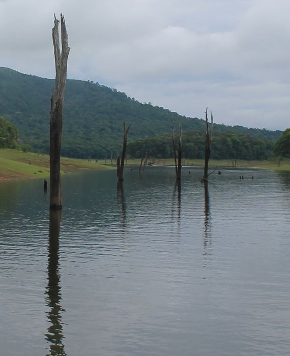 Toxic water was released into the Periyar river in Kerala after opening the dam shutters in April 2020.