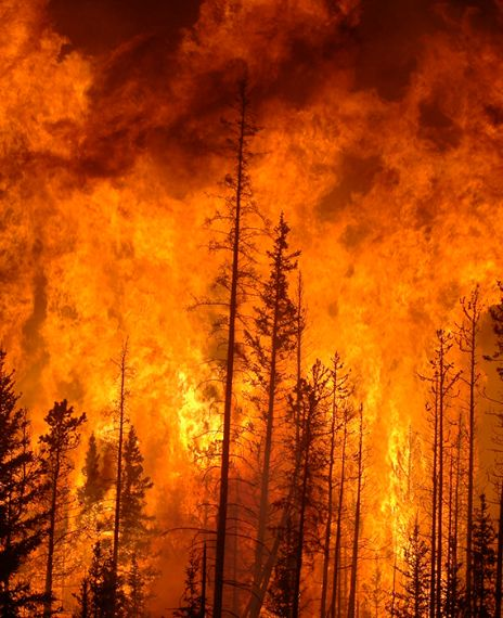 Uttarakhand forest fire season has reached its peak with 46 wildfire incidents in 2020.