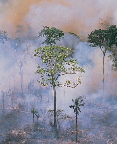 The smoke caused by the Australian bushfire has reached halfway around the world and polluted the stratosphere.