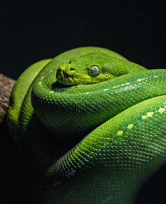 Ilha da Queimada Grande, an island in Brazil is untouched by humans because it is teeming with snakes.